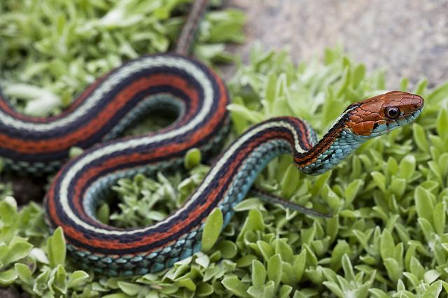 b-a-ba_serpents_1_blog_arthropodus
