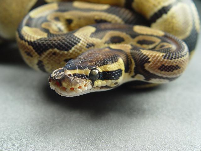 b-a-ba_serpents_2_blog_arthropodus