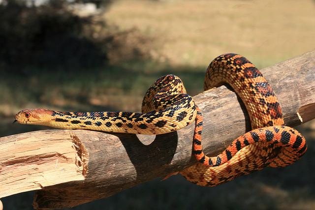b-a-ba_serpents_4_blog_arthropodus