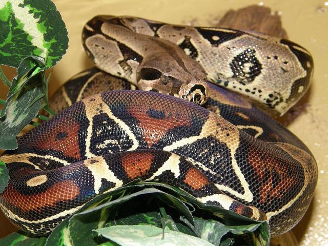 b-a-ba_serpents_5_blog_arthropodus