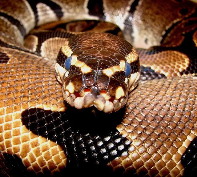 b-a-ba_serpents_9_blog_arthropodus