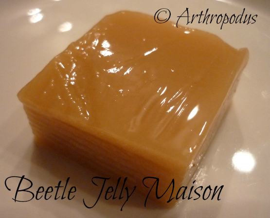 beetle_jelly_maison_arthropodus