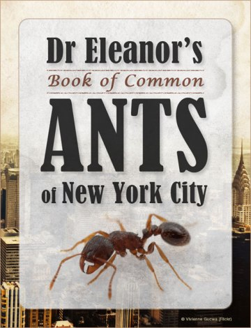dr_eleanor_s_book_of_ants_of_new_york_city