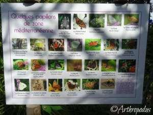 tropique_du_papillon_blog_arthropodus6