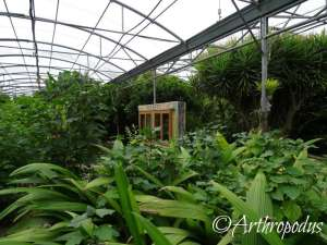 tropique_du_papillon_blog_arthropodus8