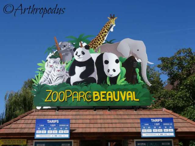zooparc_de_beauval_blog_arthropodus_1