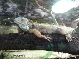 zooparc_de_beauval_blog_arthropodus_19