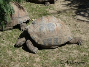 zooparc_de_beauval_blog_arthropodus_6