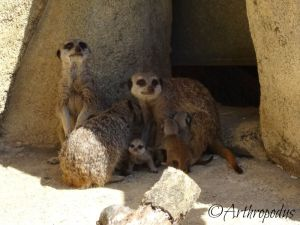 zooparc_de_beauval_blog_arthropodus_8