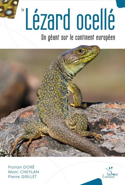 le_lezard_ocelle_-_un_geant_sur_le_continent_europeen_2015_blog_arthropodus