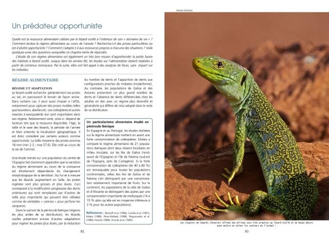 le_lezard_ocelle_-_un_geant_sur_le_continent_europeen_2015_blog_arthropodus_92-93
