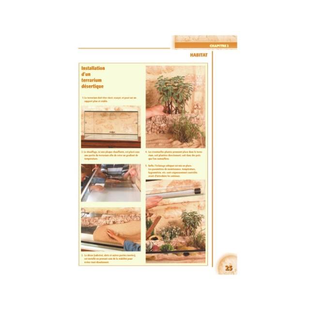 le_terrarium_philippe_gerard_blog_arthropodus_4