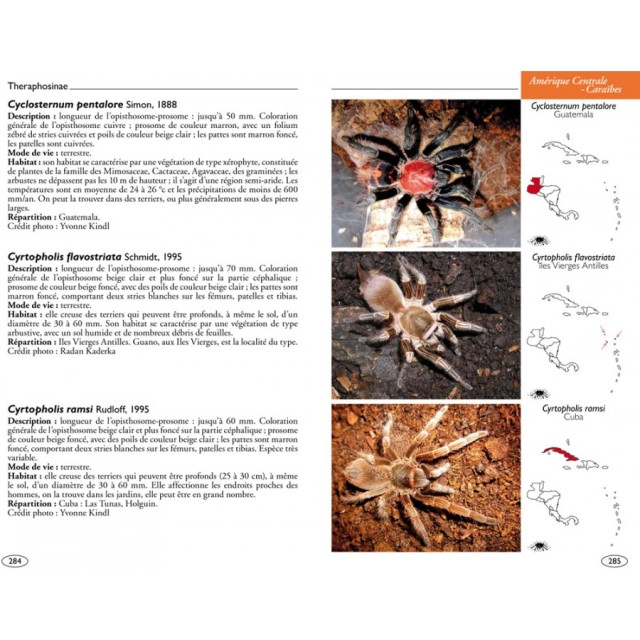 mygales-du-monde-theraphosidae-blog-arthropodus-3