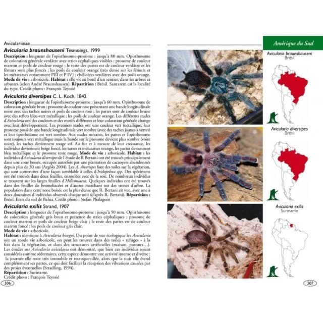 mygales-du-monde-theraphosidae-blog-arthropodus-4