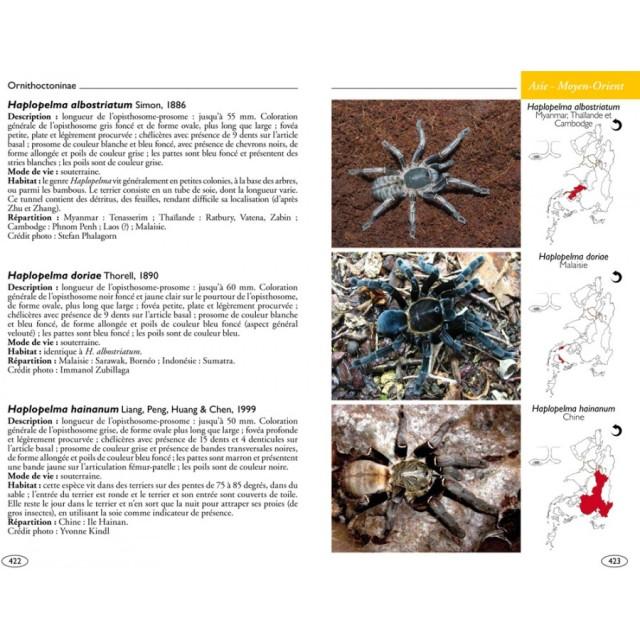 mygales-du-monde-theraphosidae-blog-arthropodus-5