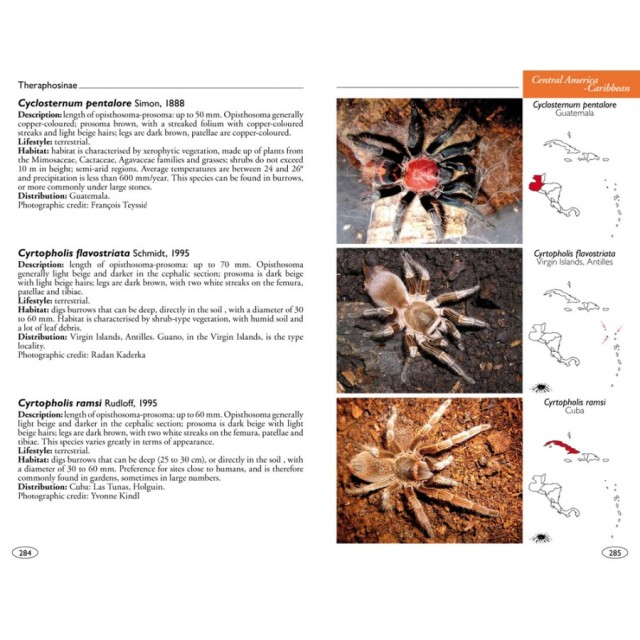 tarantulas_of_the_world_theraphosidae_blog_arthropodus_3