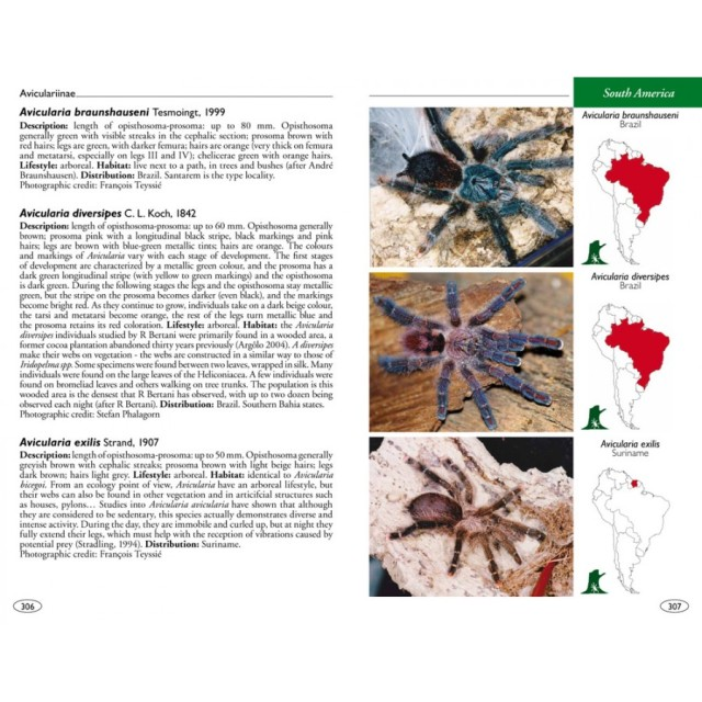 tarantulas_of_the_world_theraphosidae_blog_arthropodus_4