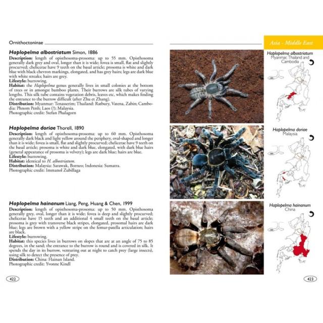tarantulas_of_the_world_theraphosidae_blog_arthropodus_5