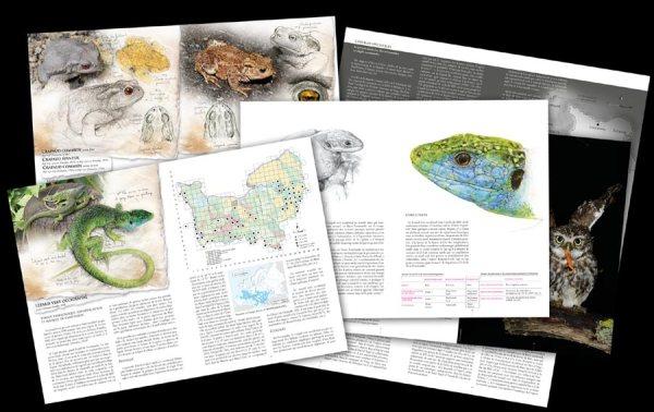 amphibiens_et_reptiles_de_normandie_blog_arthropodus_2