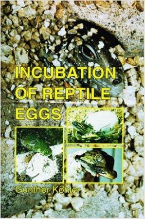 Incubation_reptiles_eggs_blog_arthropodus
