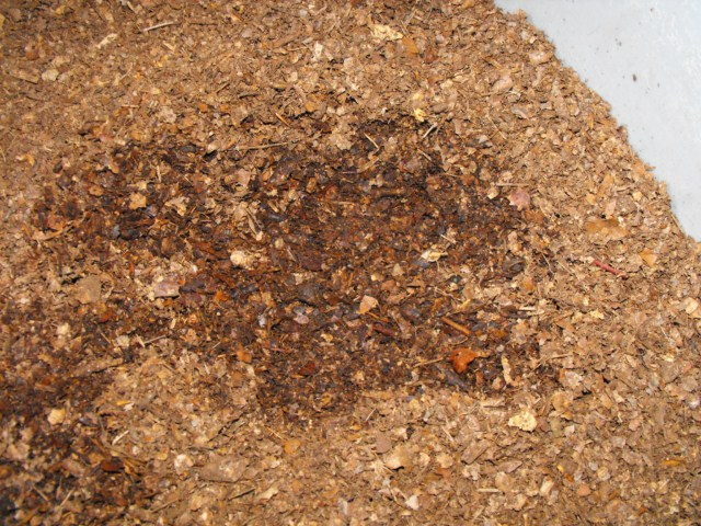 recolte_preparation_substrat_cetoine_iule_blatte_blog_arthropodus_2