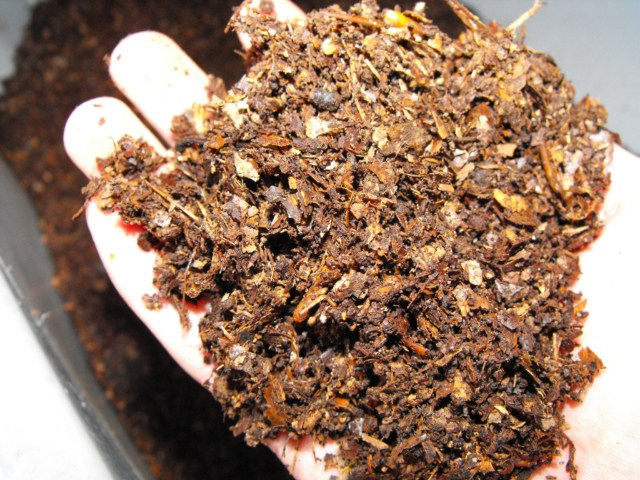 recolte_preparation_substrat_cetoine_iule_blatte_blog_arthropodus_4