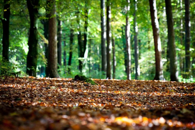 recolte_preparation_substrat_cetoine_iule_blatte_blog_arthropodus_7