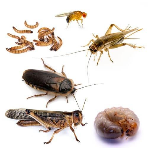 insectes_reptiles_amphibiens_blog_arthropodus
