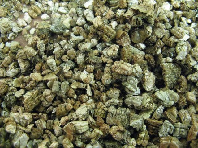 vermiculite_blog_arthropodus