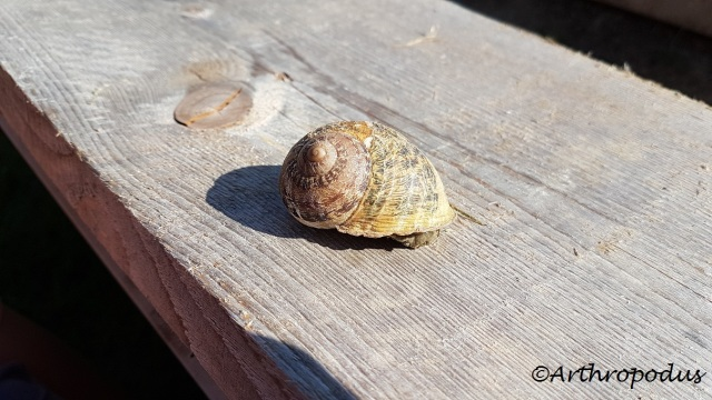 escargots_heliciculture_ferme_vailly_blog_arthropodus_9