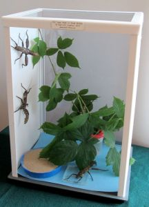 terrarium_phasmes_blog_arthropodus